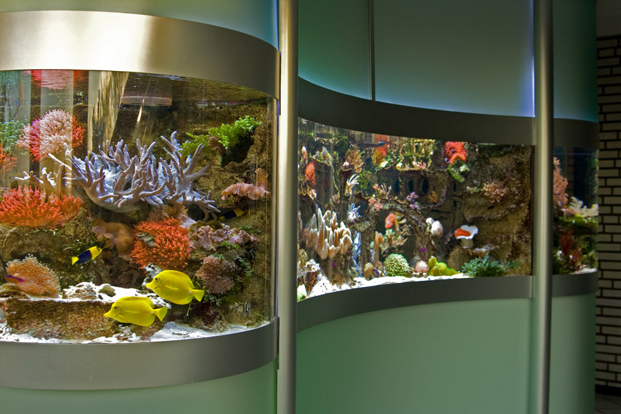 Plexiglas Aquarium Nach Maß : schuran aquarien aus plexiglas ~ Watch28wear.com Haus und Dekorationen