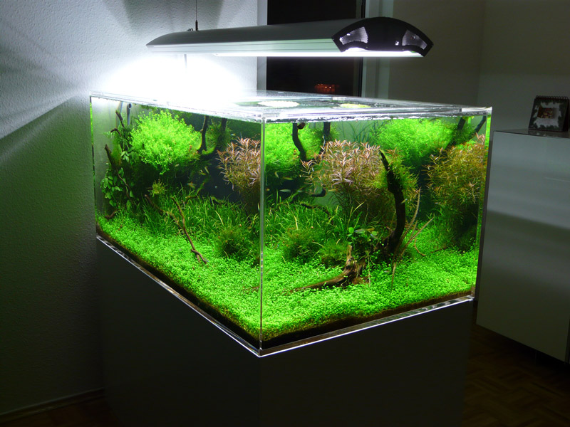 Aquarium Selber Bauen Plexiglas : aquariums ~ Watch28wear.com Haus und Dekorationen