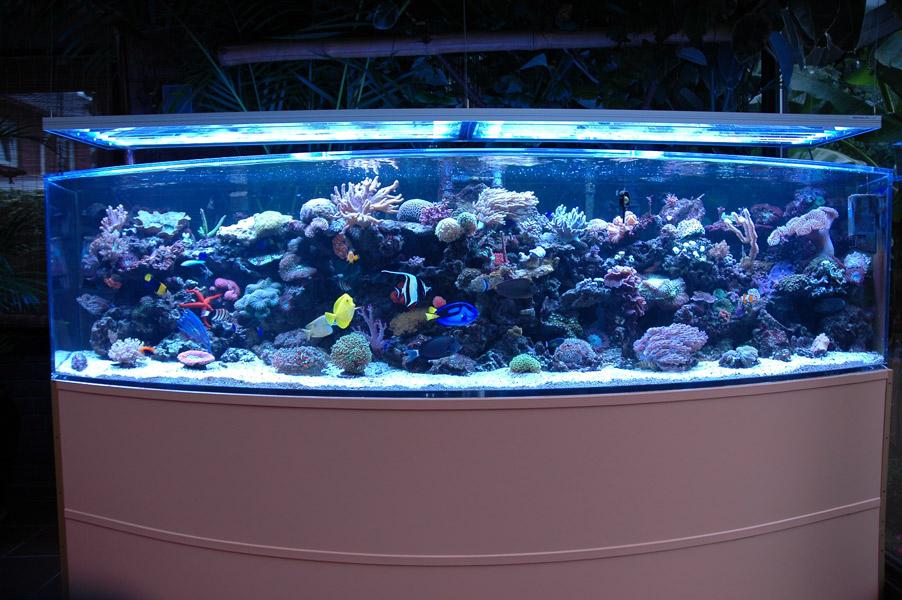 Aquarium Wohnzimmer Dekoration ~ Verschiedene Arten von Wohndesign ...